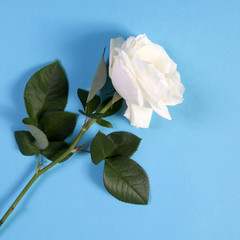 white rose on a blue background with an empty space for notes.