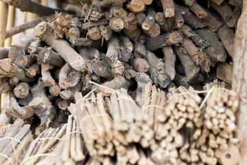 Gestapeltes Holz im Urwald von Thailand - Natur