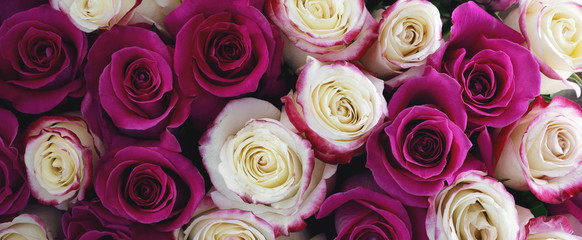 Bouquet of different roses. Panorama