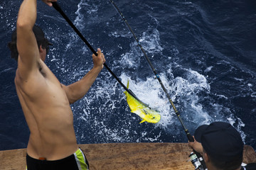two men fighting to reel in a hook a dolphin fish on a deep sea fishing boat