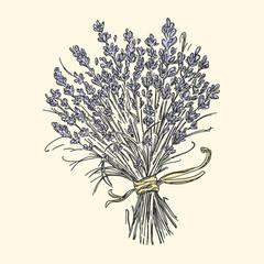 Bouquet of lavender. Vintage style. Vector illustration.