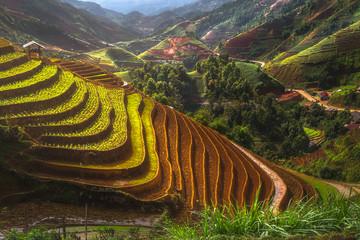 Terraced ricefield in water season in laocai, Vietnam