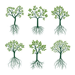 Green Trees with Leaves and Roots. Vector Illustration.