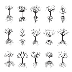 Black Naked Trees and Roots. Vector Illustration.