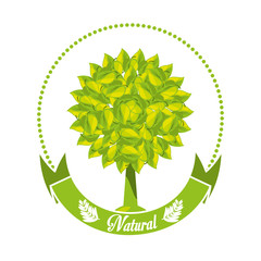 emblem of tree with leaves and ribbon vector illustration