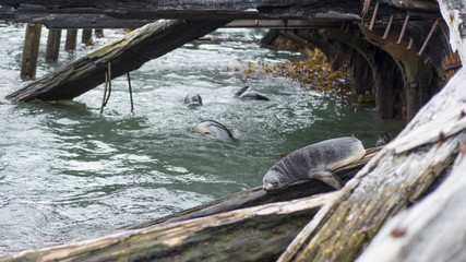 Seals & Shipwrecks