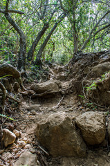 Iao Valley Path