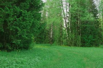 Тропинка Лето поляна деревья лес природа фото