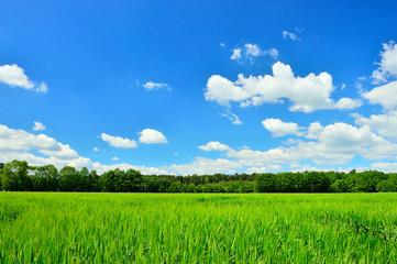 Pole, las i niebo z chmurami.