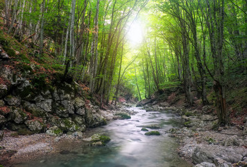 River in mountain forest. Composition of nature