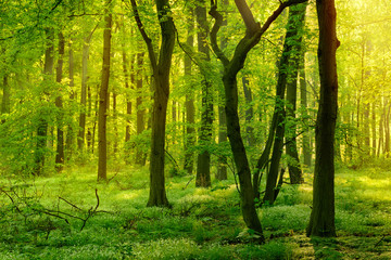 Wild Natural Forest in the Beautiful Light of the Morning Sun