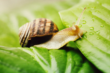 snail is climbing from a leaf to a leaf
