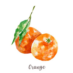 fresh orange illustration. Hand drawn watercolor on white background.
