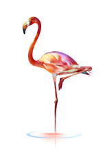 bright painted bird flamingos on a white background