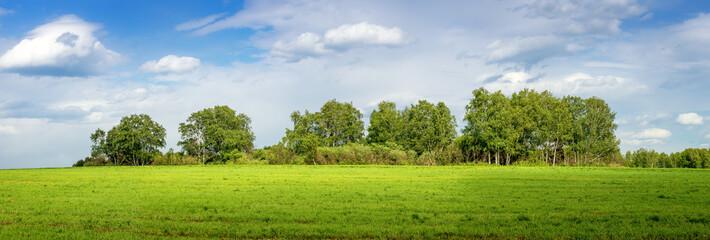 Photo sur cadre textile Bosquet de bouleaux панорама с березовой рощей в поле, Россия