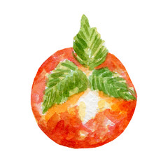 fresh persimmon illustration. Hand drawn watercolor on white background.