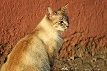 Portrait of a young cat.