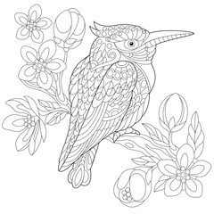 Coloring page of australian kookaburra (kingfisher bird) sitting on cherry blossoming tree branch. Freehand sketch drawing for adult anti stress coloring book with doodle and zentangle elements.