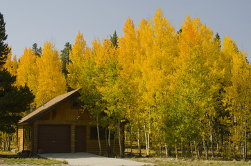 Autumn Colors Around Cabin in the Rocky Mountains