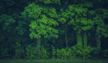 Lush Tree Growth Wall mural