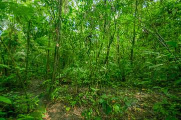 Inside of the amazonian Jungle, surrounding of dense vegetation in the Cuyabeno National Park, South America Ecuador