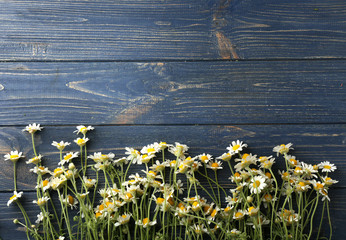 Beautiful chamomile flowers on wooden background