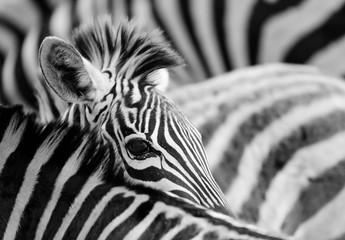 Foto op Canvas Zebra zebra eye