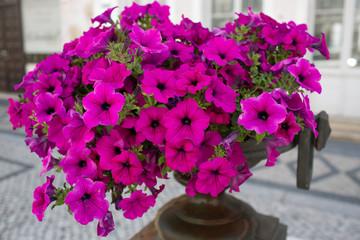 Fiori nel vaso in città