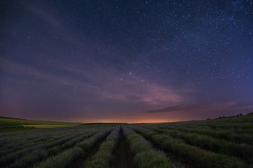 Starry sky over the lavender field