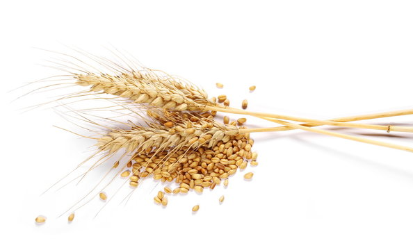 Ears of wheat and seeds isolated on white background