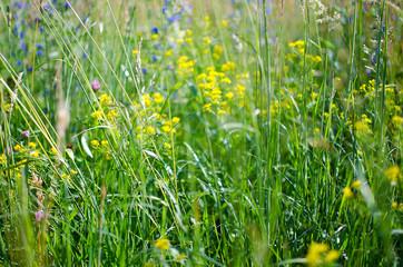 Green grass stem growing outdoors