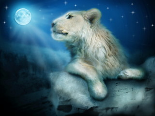 Lion in night