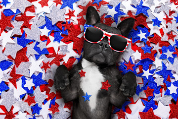 Stores photo Chien de Crazy independence day 4th of july dog