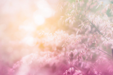 nature grass flower field in soft focus , pink pastel background with sunlight