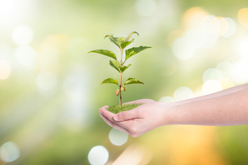 Sustainable Green Ideas with tree planting on volunteer's hands