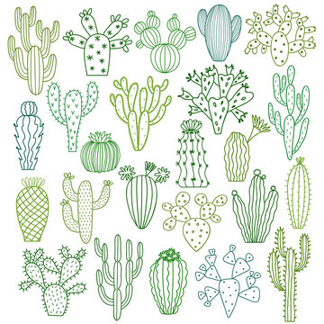 Cactus vector illustrations. Hand drawn cactus plants set