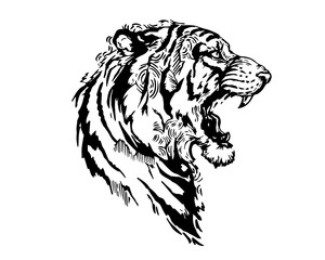 Detail Realistic Hand Drawing Angry Tiger Head Illustration