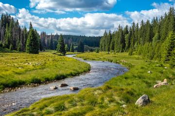 Flusslauf im Nationalpark, Waldbach Fototapete
