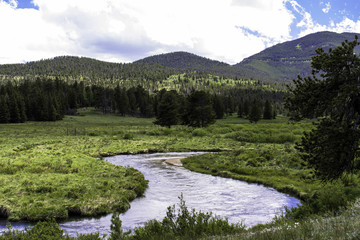 Stream flows through a wet meadow in Rocky Mountain National Park