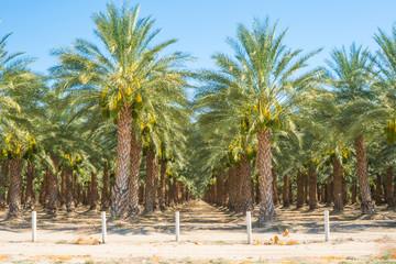 Palm Tree Farm