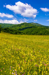 countryside summer landscape in mountains