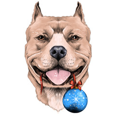 dog breeds the American pit bull Terrier brown color head with new year's ball in the teeth sketch vector graphics color picture