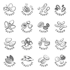 collection of monochrome nuts icons