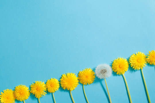 Row Of Dandelions. Creativity Creative Thinking Ideas Grow Up Life Future Concept