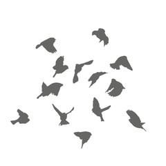 A flock of sparrows takes off, the silhouettes.
