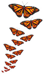 Butterfly, monarch, wings, flying, insect, nature, cartoon, black, orange, white, many, little, big, large, different, middle,