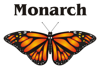 Butterfly, monarch, wings, flying, insect, nature, cartoon, black, orange, white, word, name, black, letters,