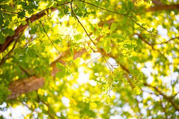 Sonnenstrahlen leuchten durch Blätterdach