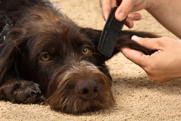 hands combing hair of dog