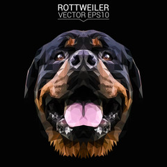 Rottweiler dog animal low poly design. Triangle vector illustration.